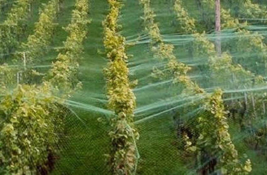 Инновационные системы защиты сада и ягодника во время неблагоприятных погодных условий