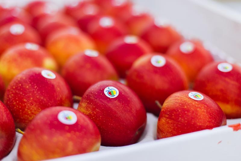 UApple диверсифікує виробництво фруктів і активно розширює географію збуту