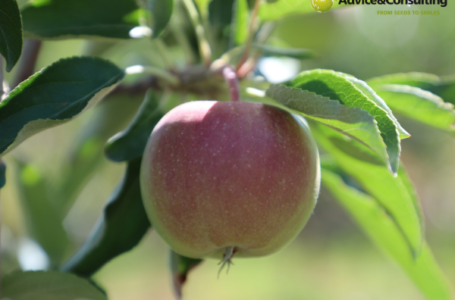 У Казахстані зростає інтенсивне плодівництво: Arnau Agro і Advice & Consulting – партнерство, яке розвивається роками і приносить якісні фрукти!