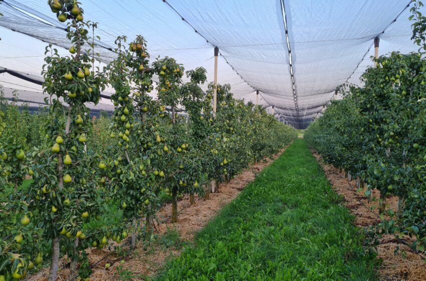 Якісне живлення та регуляція розвитку садових культур