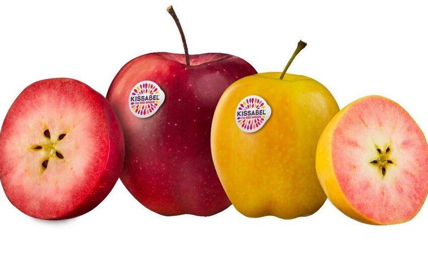 Яблука із червоною м'якоттю стають все більш популярними в Європі