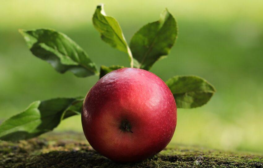 Живлення, захист, профілактика хвороб. Як із допомогою сучасних препаратів виростити здоровий яблуневий сад та зібрати щедрий урожай