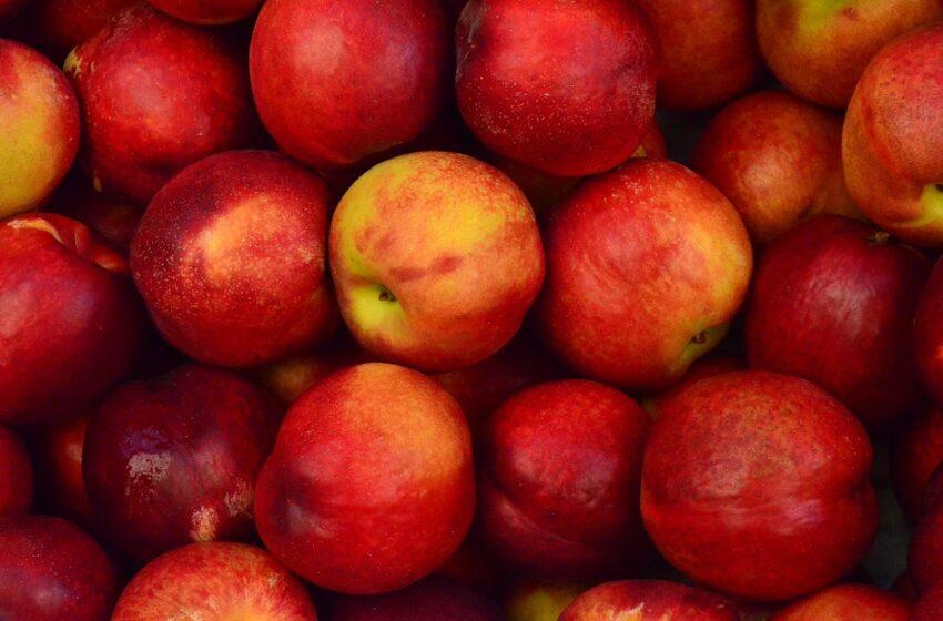 На Волині встановили сховище для яблук